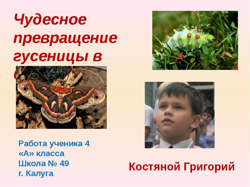 Чудесное превращение гусеницы в бабочку Работа ученика 4 «А» класса Школа № 4...