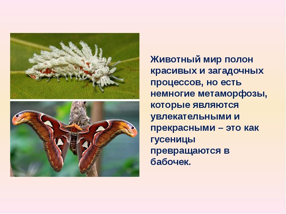 Животный мир полон красивых и загадочных процессов, но есть немногие метаморф...