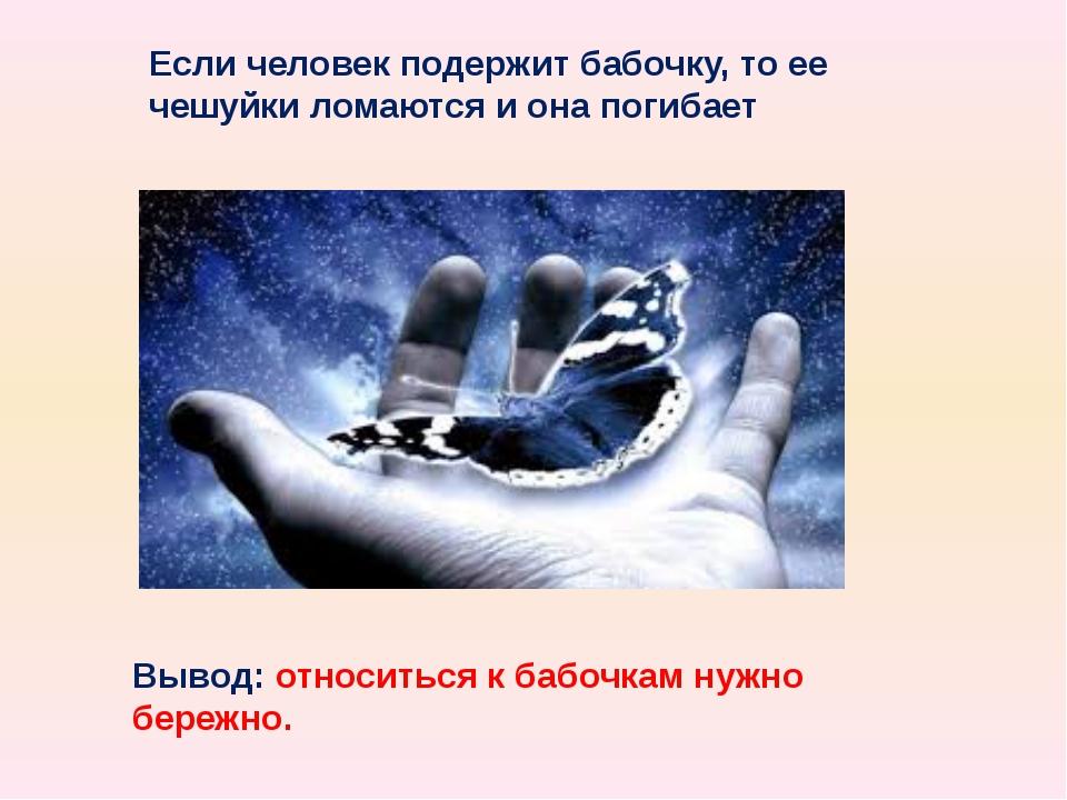 Если человек подержит бабочку, то ее чешуйки ломаются и она погибает Вывод: о...