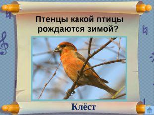 Кто из этих животных не обитает в Орловской области? песец