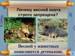 Найди ошибку. Край помнит шаги Ивана Тургенева, Афанасия Фета, Фёдора Тютчева
