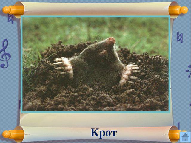 Почему весной охота строго запрещена? Весной у животных появляются детеныши.