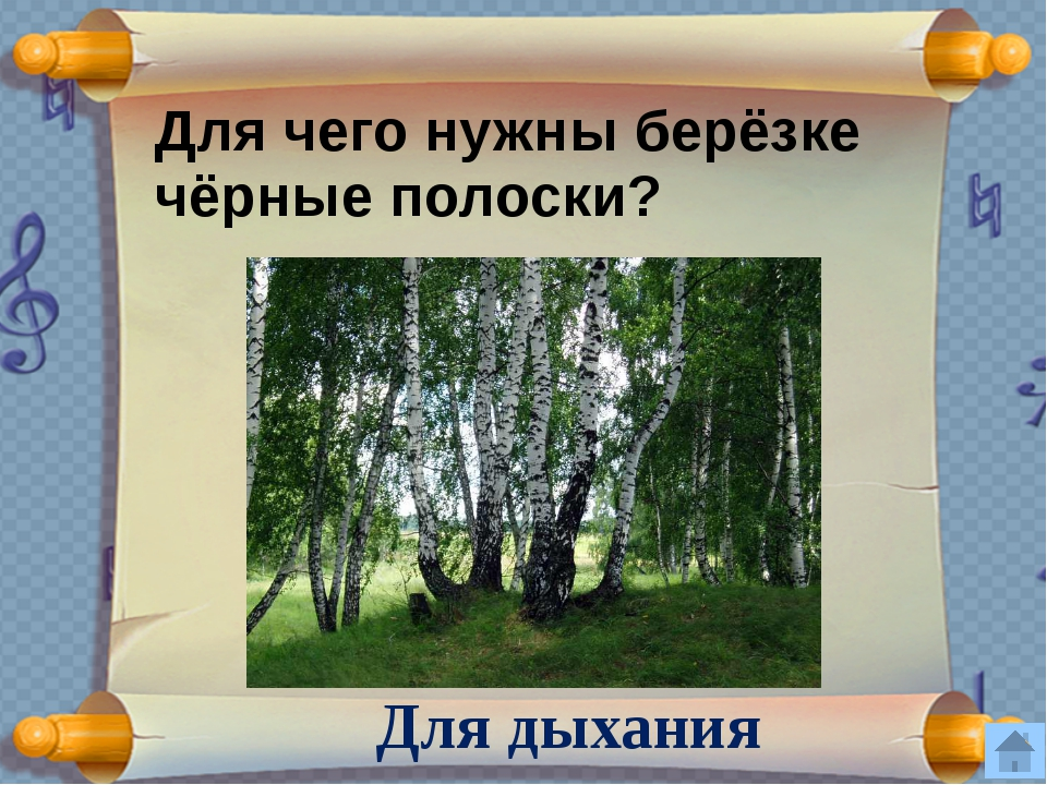 Кору, какого дерева не обгладывают зайцы? Кору черемухи