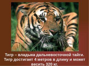Тигр – владыка дальневосточной тайги. Тигр достигает 4 метров в длину и может