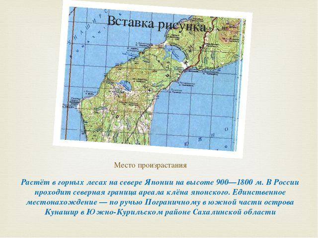 Место произрастания Растёт в горных лесах на севере Японии на высоте 900—1800...