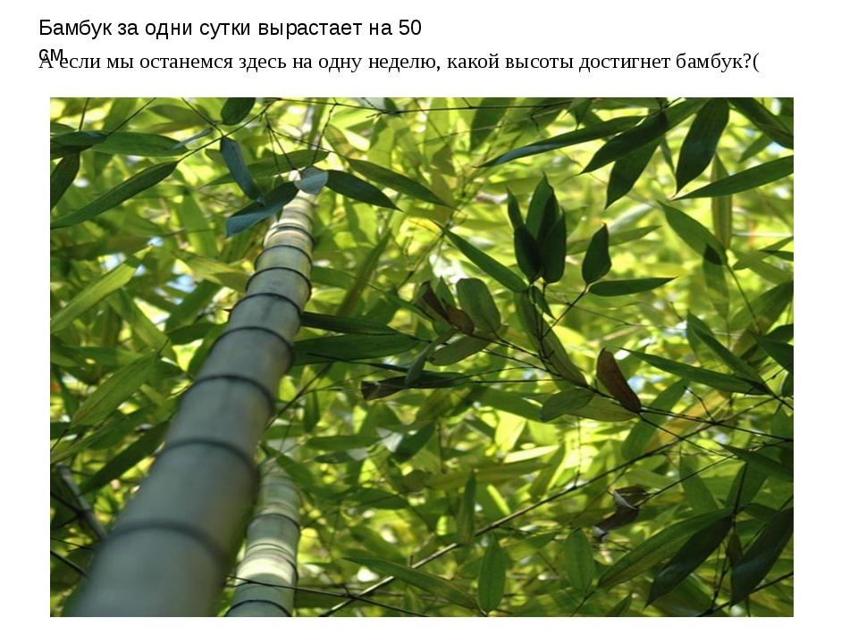 Бамбук за одни сутки вырастает на 50 см. А если мы останемся здесь на одну не...