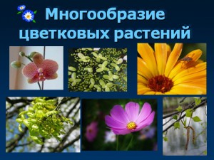 hello_html_444679d5.jpg