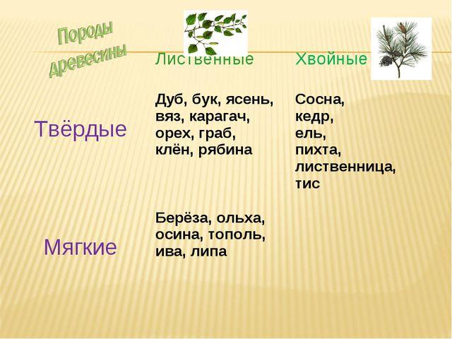 Лиственные Хвойные ТвёрдыеДуб, бук, ясень, вяз, карагач, орех, граб, клён...