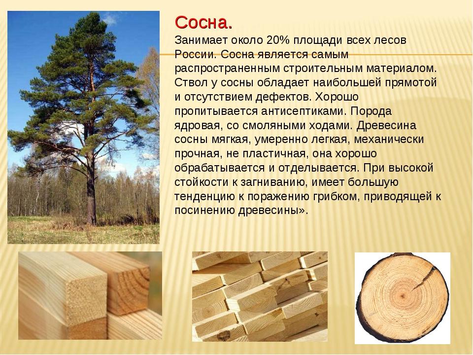 Реферат на тему древесина кратко 2791