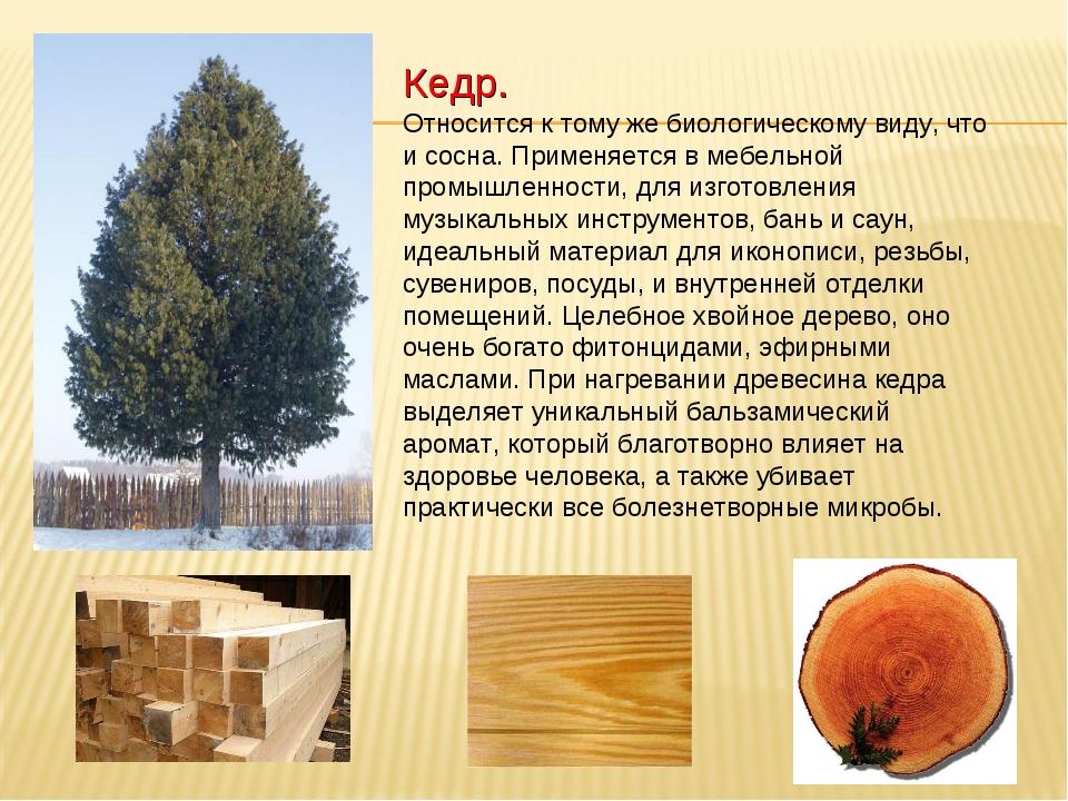 Кедр. Относится к тому же биологическому виду, что и сосна. Применяется в меб...