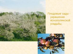 Плодовые сады - украшение яснополянской усадьбы.