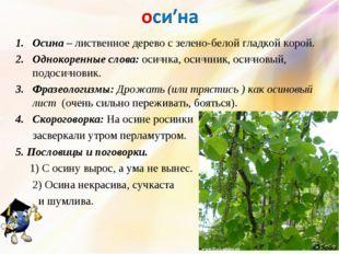 Осина – лиственное дерево с зелено-белой гладкой корой. Однокоренные слова: о