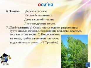 6. Загадка: Дерево красивое Из семействаивовых. Даже в сонной тишине