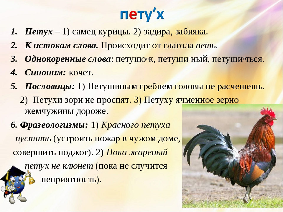 Петух – 1) самец курицы. 2) задира, забияка. К истокам слова. Происходит от г...
