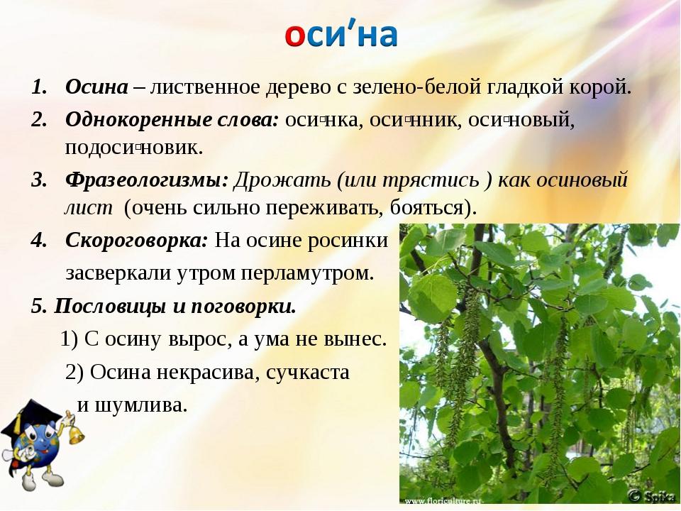 Осина – лиственное дерево с зелено-белой гладкой корой. Однокоренные слова: о...