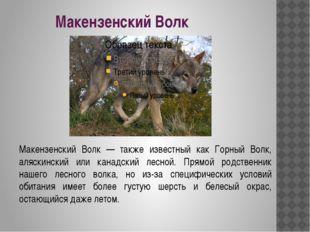 Макензенский Волк Макензенский Волк — также известный как Горный Волк, аляски
