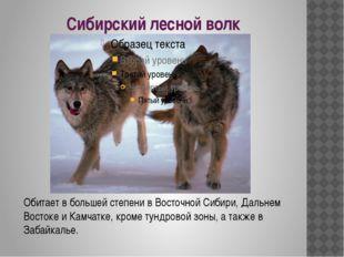 Сибирский лесной волк Обитает в большей степени в Восточной Сибири, Дальнем В