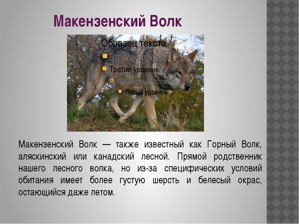 Макензенский Волк Макензенский Волк — также известный как Горный Волк, аляски...