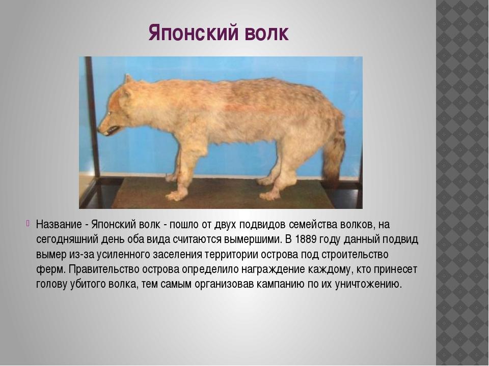 Японский волк Название - Японский волк - пошло от двух подвидов семейства вол...