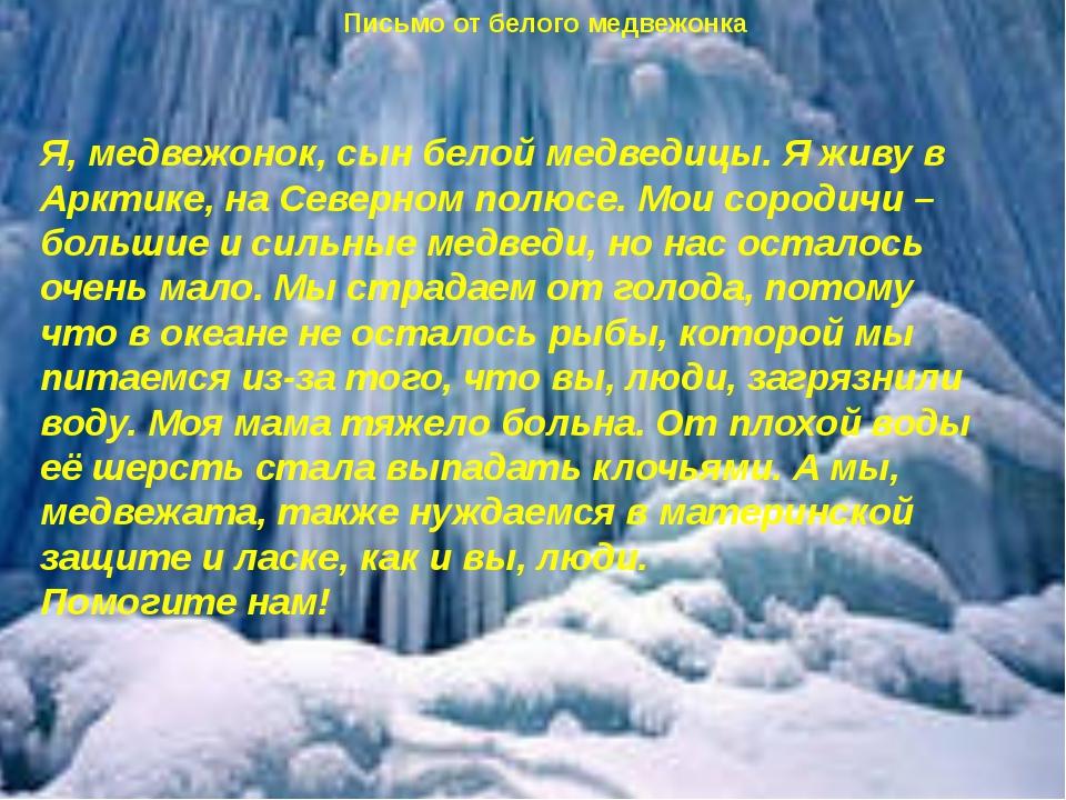 Я, медвежонок, сын белой медведицы. Я живу в Арктике, на Северном полюсе. Мо...