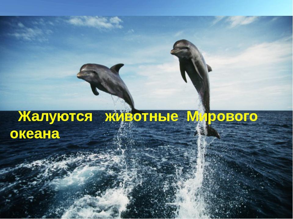 Жалуются животные Мирового океана
