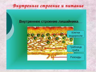 Внутреннее строение и питание лишайника