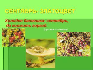 СЕНТЯБРЬ- ЗЛАТОЦВЕТ Холоден батюшка- сентябрь, да кормить горазд. (русская по
