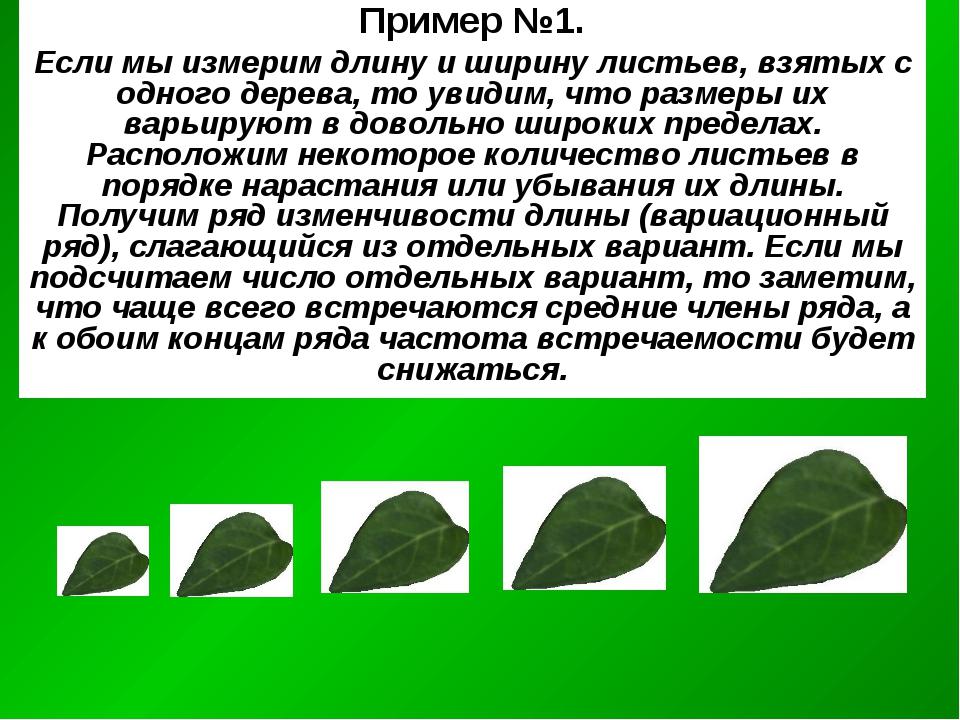 Пример №1. Если мы измерим длину и ширину листьев, взятых с одного дерева, то...