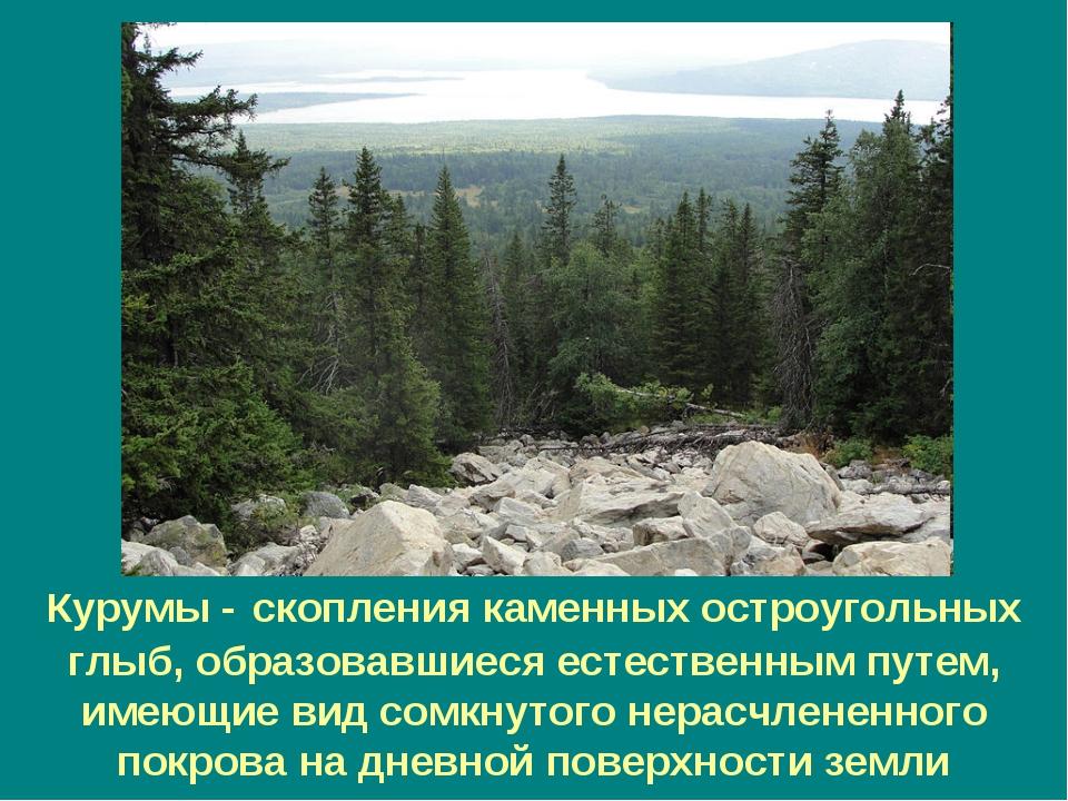 Курумы - скопления каменных остроугольных глыб, образовавшиеся естественным п...