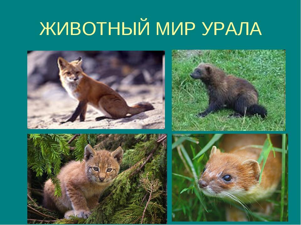 дикие животные урала фото и описание гостинице витязь можно