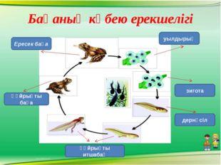 Бақаның көбею ерекшелігі Ересек бақа Құйрықты бақа уылдырық зигота дернәсіл қ