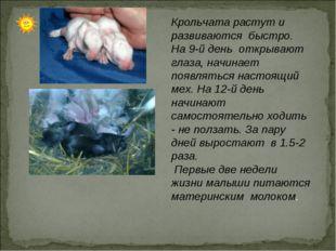 Крольчата растут и развиваются быстро. На 9-й день открывают глаза, начинает