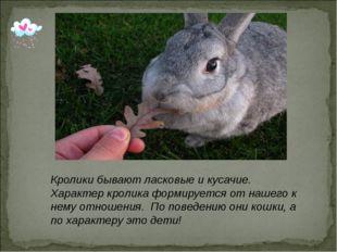 Кролики бывают ласковые и кусачие. Характер кролика формируется от нашего к н