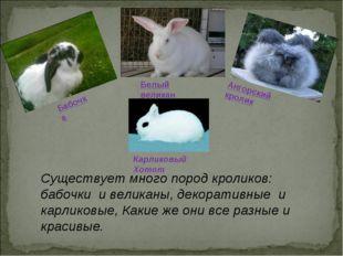 Существует много пород кроликов: бабочки и великаны, декоративные и карликов