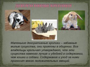 Маленькие декоративные кролики – забавные милые существа, они приятны в общен