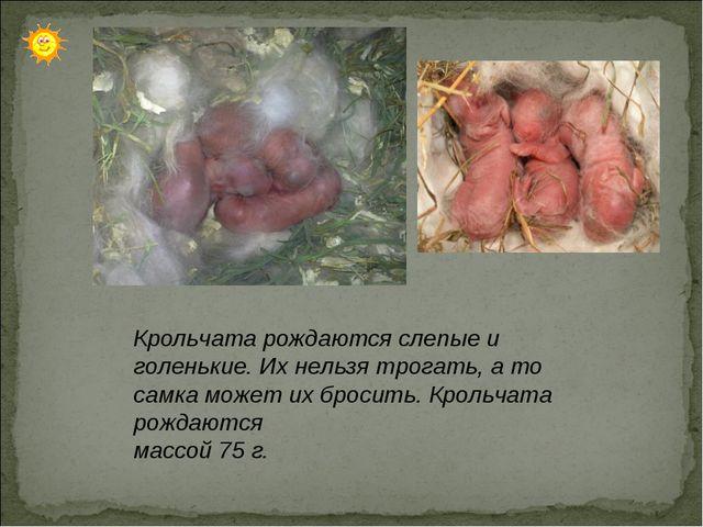 Крольчата рождаются слепые и голенькие. Их нельзя трогать, а то самка может...