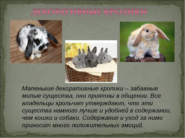 Маленькие декоративные кролики – забавные милые существа, они приятны в общен...