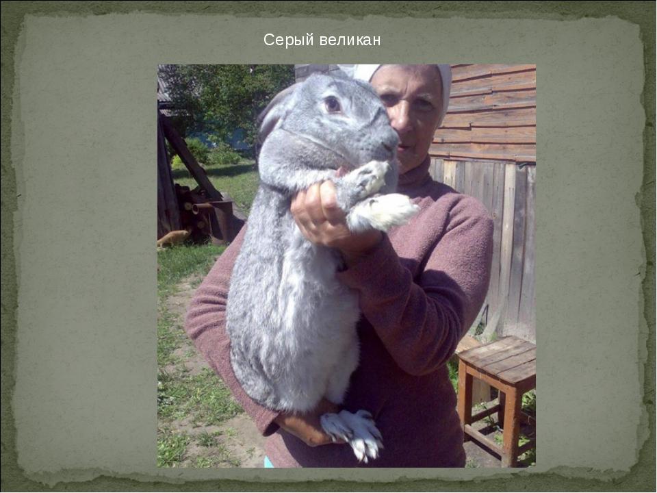 Серый великан