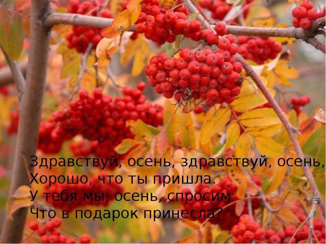Здравствуй, осень, здравствуй, осень, Хорошо, что ты пришла. У тебя мы, осень...