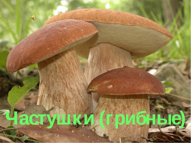 Частушки (грибные)