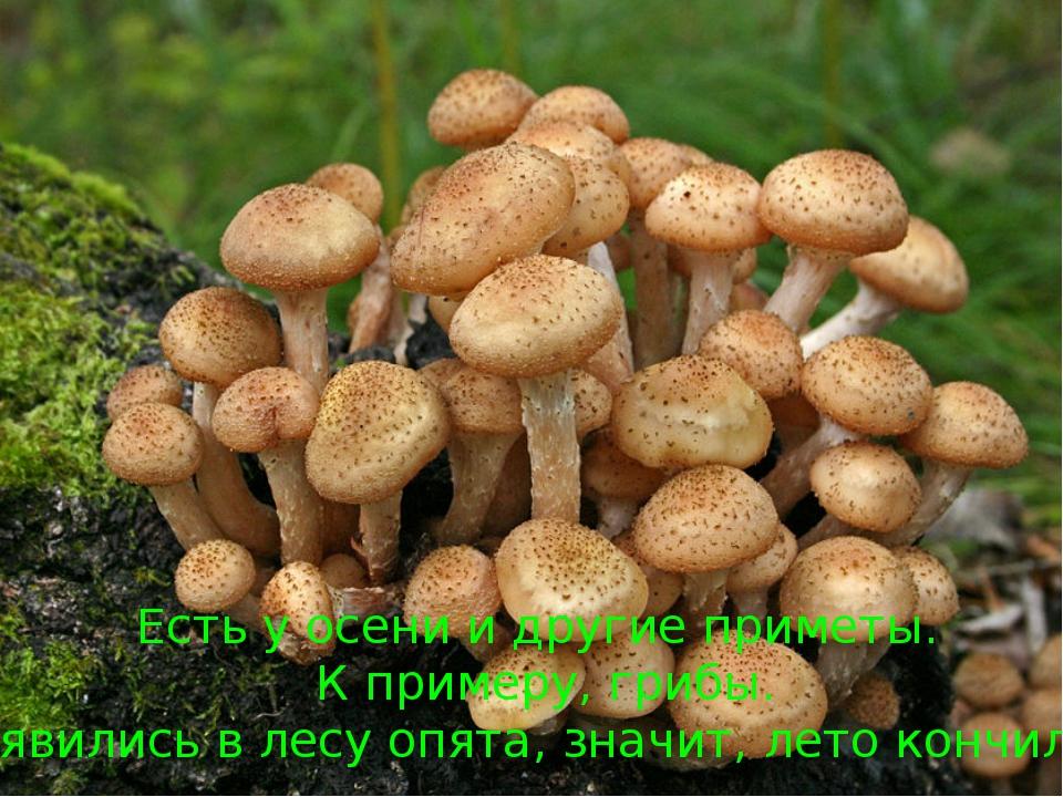 Есть у осени и другие приметы. К примеру, грибы. Появились в лесу опята, знач...