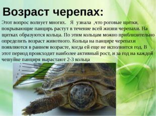 Возраст черепах: Этот вопрос волнует многих. Я узнала ,что роговые щитки, пок