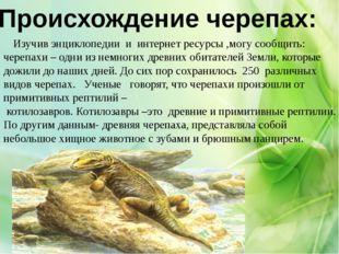 Происхождение черепах: Изучив энциклопедии и интернет ресурсы ,могу сообщить:
