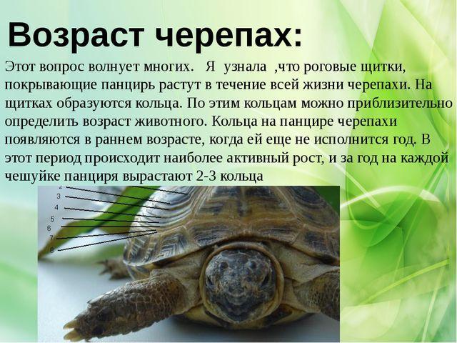 Возраст черепах: Этот вопрос волнует многих. Я узнала ,что роговые щитки, пок...