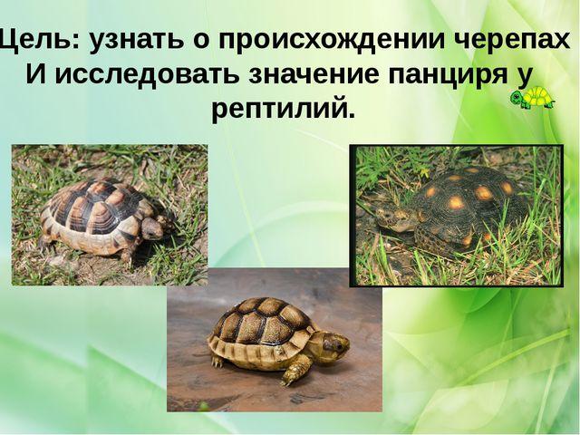 Цель: узнать о происхождении черепах И исследовать значение панциря у рептилий.