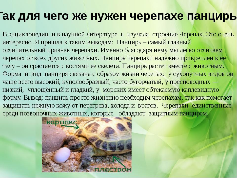 Так для чего же нужен черепахе панцирь: В энциклопедии и в научной литературе...