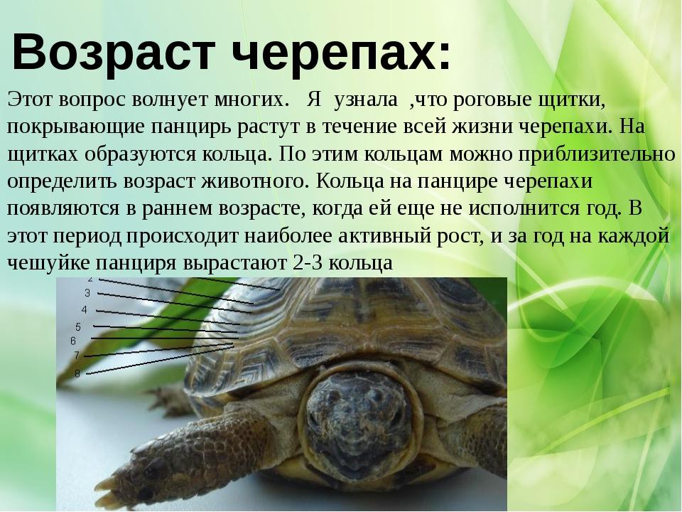того, как определить возраст черепахи по панцырю первого слоя одевается