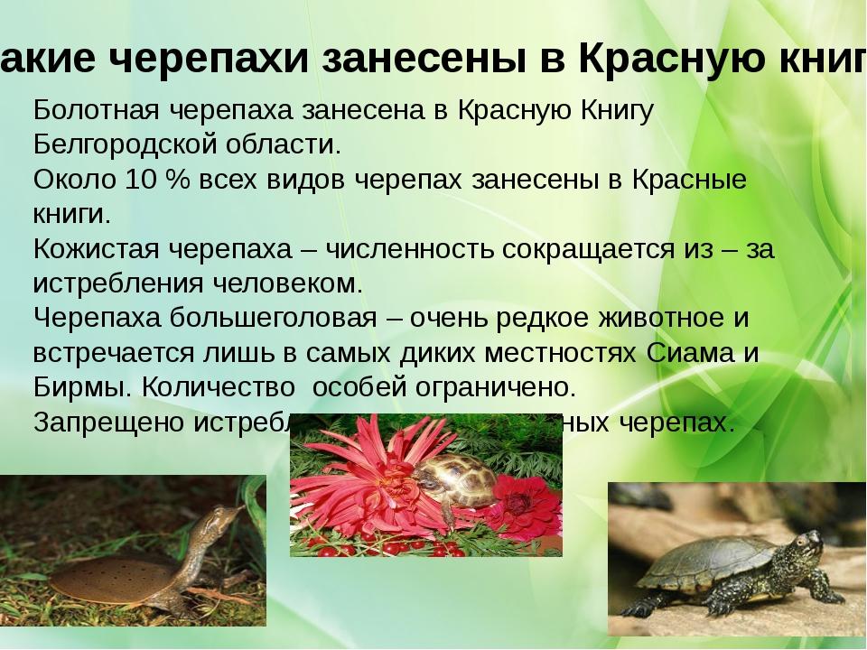 Какие черепахи занесены в Красную книгу Болотная черепаха занесена в Красную...