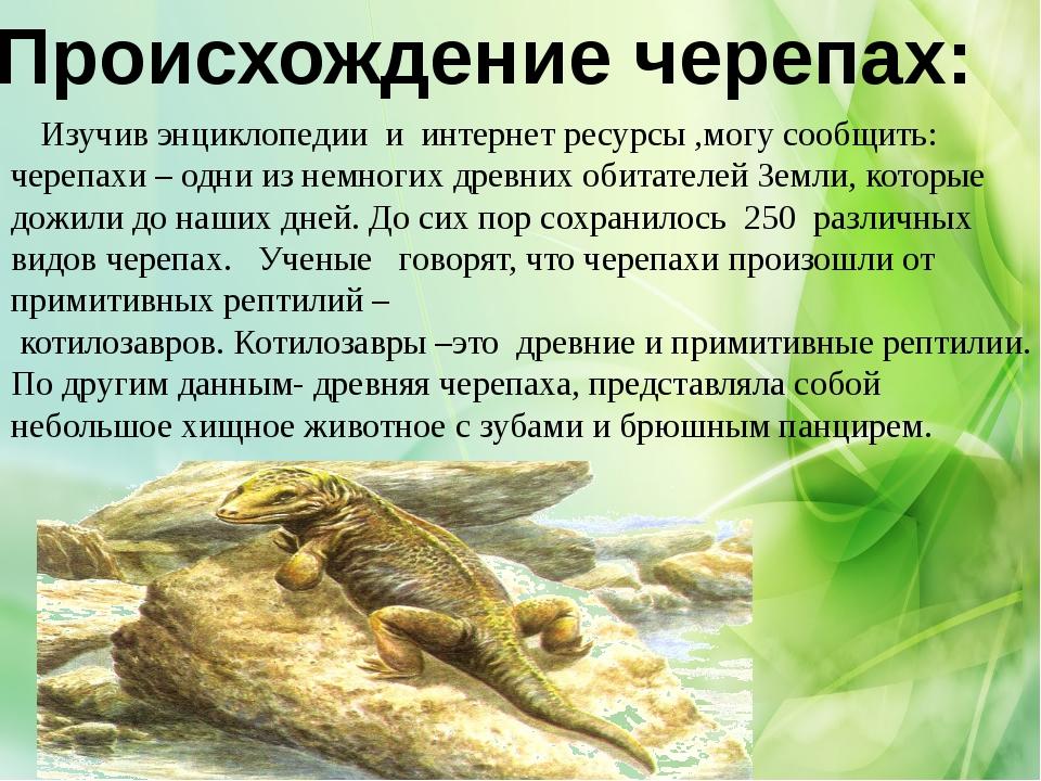 Происхождение черепах: Изучив энциклопедии и интернет ресурсы ,могу сообщить:...