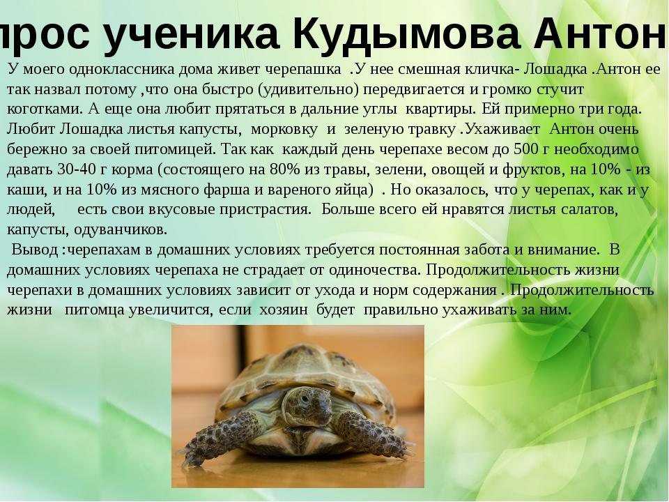 Опрос ученика Кудымова Антона: У моего одноклассника дома живет черепашка .У...